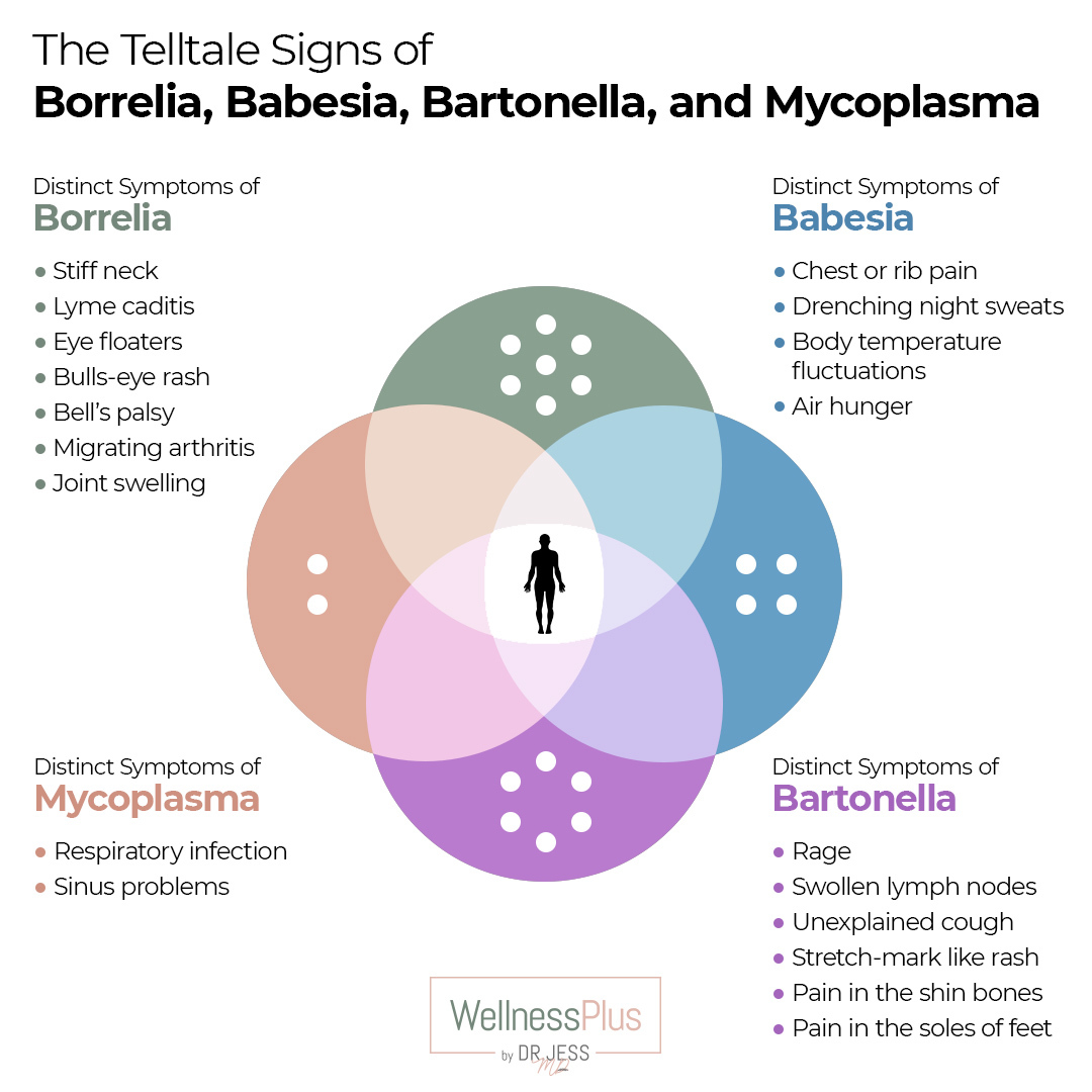The telltale signs of Borrelia, Babesia, Bartonella, and Mycoplasma